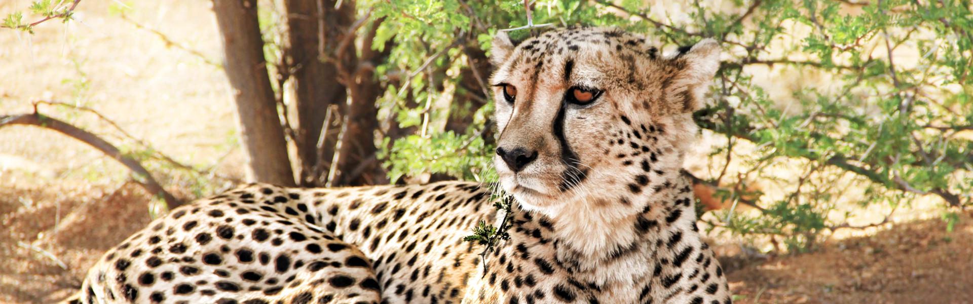 Mietwagenreisen Namibia - Tier-Reisen