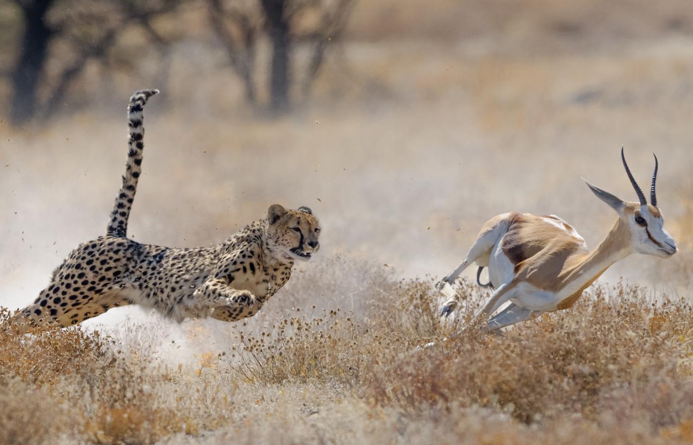 Namibia entdecken