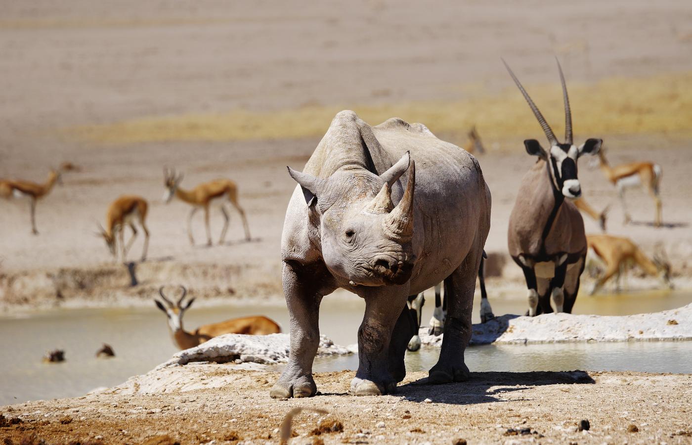 Namibia Natur & Tiere intensiv