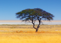 Namibia Mietwagenreise - Namibia Highlights Family-Tour
