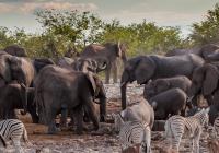 Namibia Mietwagenreise - Namibia exquisit & kompakt